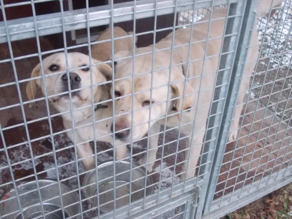 Psy znalezione w dniu 25 grudnia 2016 r. w miejscowości Stróże