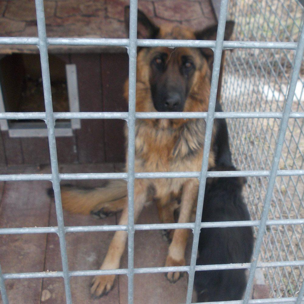 Psy znalezione 12 marca w miejscowości Borowa