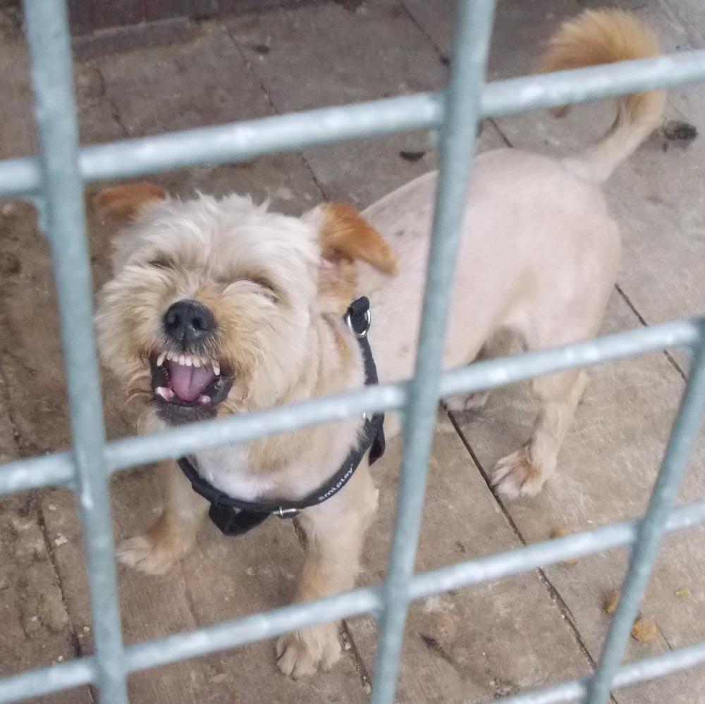 Pies znaleziony 10 lipca w miejscowosci Zakliczyn