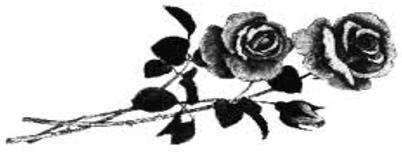 róża żałobna