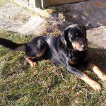 Znaleziono psa w miejscowości Jamna