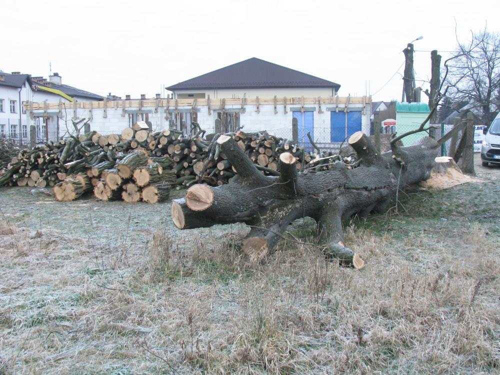 Drewno opałowe pozyskane z wycinki drzew z nieruchomości stanowiących własność Gminy Zakliczyn