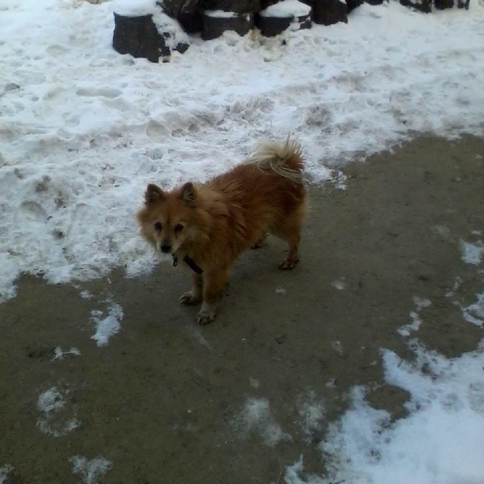Pies znaleziony w dniu 28 lutego 2018 r. na terenie miejscowości Filipowice
