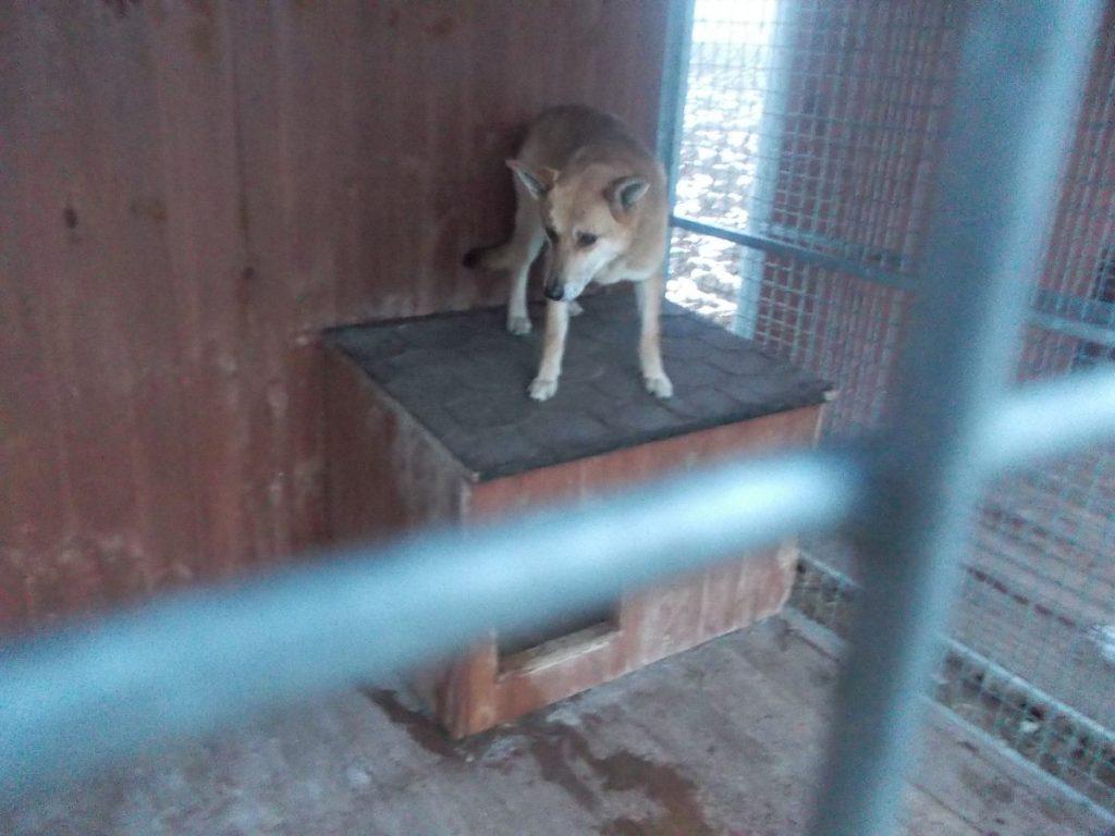 Pies znaleziony na terenie Gminy Zakliczyn w miesiącu marcu 2018 r.