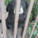Pies znaleziony w dniu 12 września 2018 r. na terenie Gminy Zakliczyn