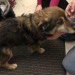 Znaleziono psa na terenie miejscowości Wróblowice