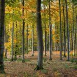 drzewa w lesie liściatym